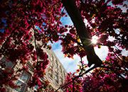Queen's University IRC - Spring 2014 Article Recap